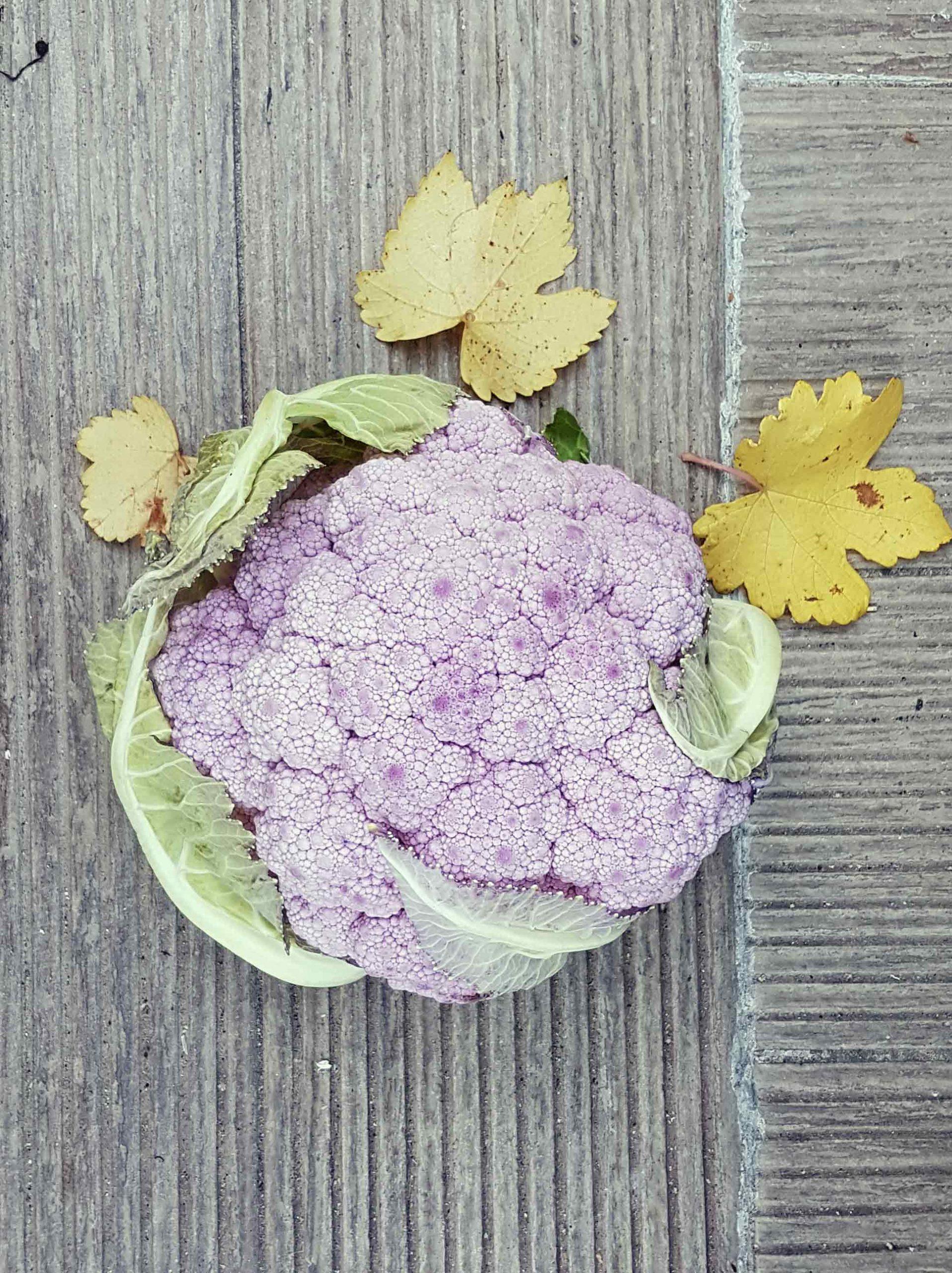 cavolfiore-viola