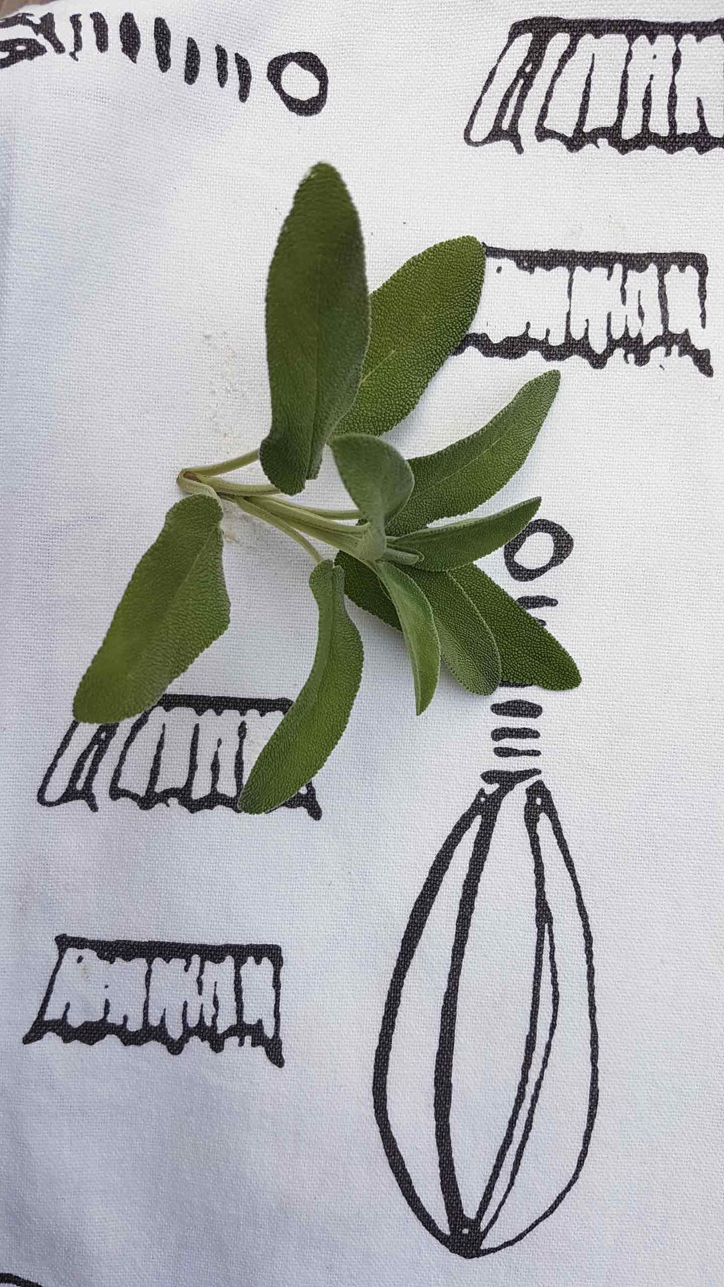 foglie-di-salvia
