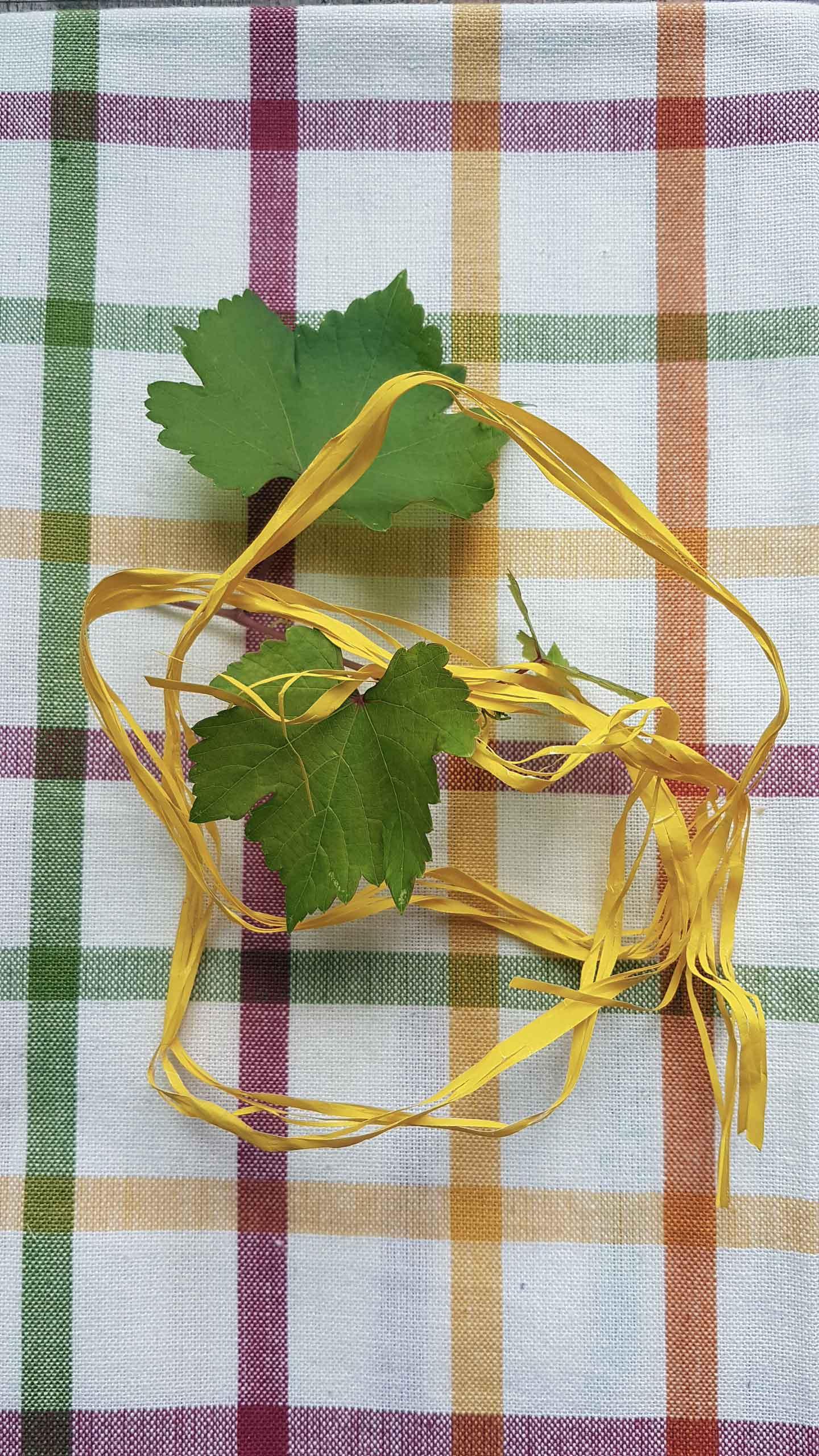 foglie-di-vite