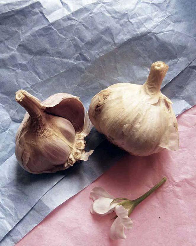 teste-di-aglio